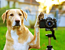 dog_with_paw_on_camera